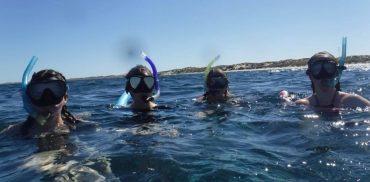 Snorkelling Monkey Mia
